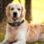 dispositivos de seguridad para mascotas