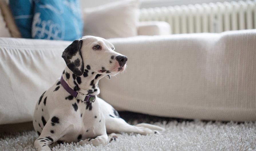 Cómo funciona el sensor de alarma antimascotas y cómo evitar falsas alarmas